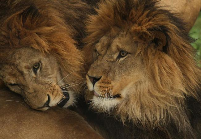 DEN 10. Safari Park