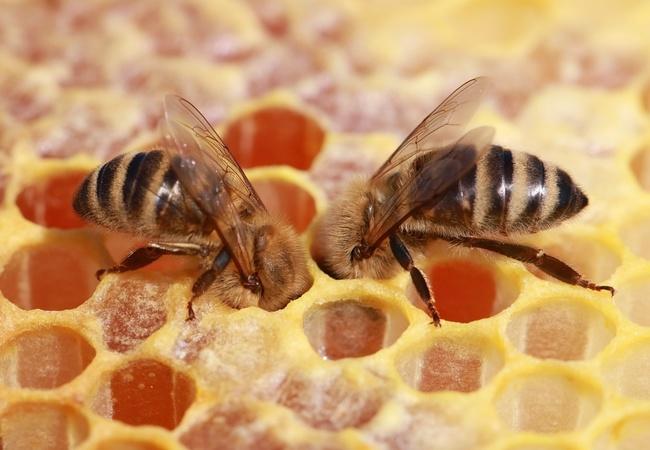 Utajený včelín